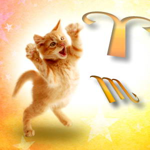 cat-horoscope